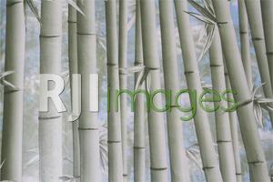 Wallpaper motif hutan bambu