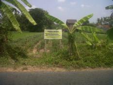 tanah ringinsari maguwoharjo